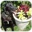 Photo 1 - Labrador Retriever/Hound (Unknown Type) Mix Dog for adoption in Wyoming, Minnesota - Jetson- Easy!