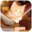 Photo 3 - Domestic Shorthair Kitten for adoption in Overland Park, Kansas - Peter, Paul & Mary