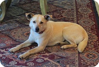 Labrador Retriever Mix Dog for adoption in West Milford, New Jersey - ZOEY