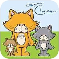 Adopt A Pet :: & MORE Cats! Not On the Web Yet! - San Jose, CA