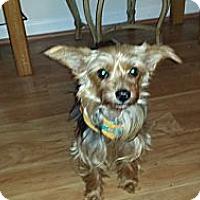 Adopt A Pet :: Summer - Mt Gretna, PA