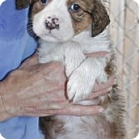 Adopt A Pet :: TREVOR WILDER - Southampton, PA