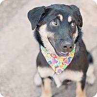 Adopt A Pet :: Carly - Kingwood, TX