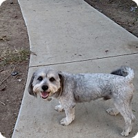 Adopt A Pet :: Lager - Simi Valley, CA