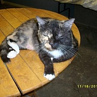 Calico Cat for adoption in Live Oak, Florida - Lilly