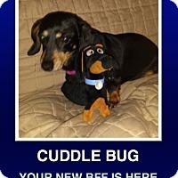 Adopt A Pet :: Piper - Morrisville, PA