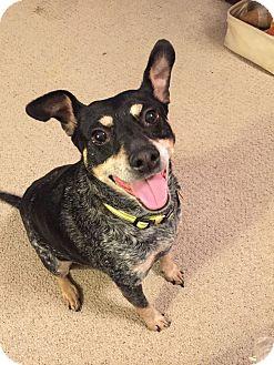 Shepherd (Unknown Type) Mix Dog for adoption in Homewood, Alabama - Maggie H