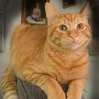Adopt A Pet :: Jaz - Arlington/Ft Worth, TX