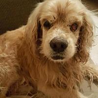 Adopt A Pet :: Jasper - Houston, TX