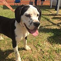 Adopt A Pet :: Sabrina - Ellaville, GA