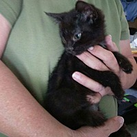Adopt A Pet :: Lafonda - Lancaster, CA