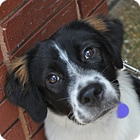 Adopt A Pet :: Watson - Atlanta, GA
