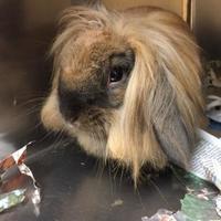 Adopt A Pet :: Eleanor - Corvallis, OR