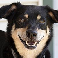 Adopt A Pet :: Lucy - Broken Arrow, OK