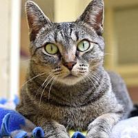 Adopt A Pet :: Janis - St. Paul, MN