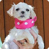 Adopt A Pet :: DAKOTA - McKinney, TX