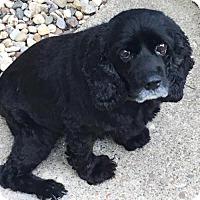 Adopt A Pet :: Miss Daisy - Coldwater, MI
