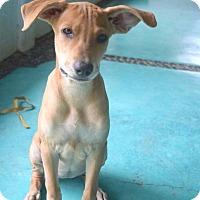 Adopt A Pet :: Huatita - San Diego, CA