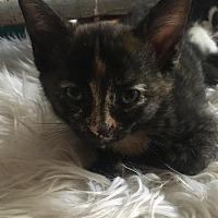 Adopt A Pet :: Dee - Columbus, OH