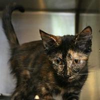 Adopt A Pet :: Justine - Hilton Head, SC