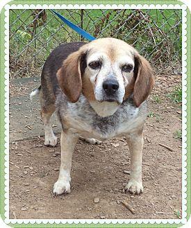 Beagle Mix Dog for adoption in Marietta, Georgia - LADY