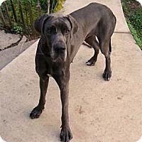 Adopt A Pet :: Amore - Martinsburg, WV