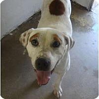 Adopt A Pet :: Leroy - Winter Haven, FL