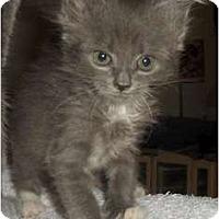 Adopt A Pet :: Faith - Richmond, VA