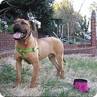Adopt A Pet :: Duke - Alexandria, VA