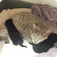 Adopt A Pet :: Dharma - Milwaukee, WI