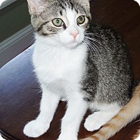 Adopt A Pet :: Soccer - Bentonville, AR