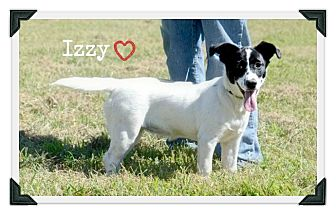 Border Collie Mix Puppy for adoption in Chester, Connecticut - Izzy