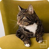 Adopt A Pet :: Melissa - Lambertville, NJ