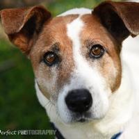Adopt A Pet :: Toni - Miami, FL