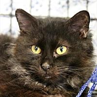 Adopt A Pet :: Casper - Asheville, NC
