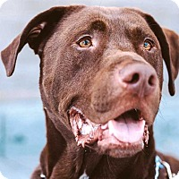 Adopt A Pet :: Moby - Concord, CA