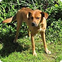 Adopt A Pet :: Kenny - Oakland, AR