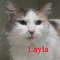 Adopt A Pet :: Layla - Warren, PA