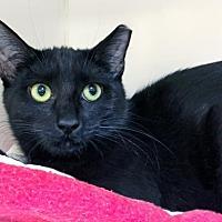 Adopt A Pet :: CROW - Toledo, OH