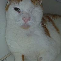 Adopt A Pet :: Winky - Hamburg, NY