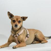 Adopt A Pet :: Chanel - Santa Cruz, CA