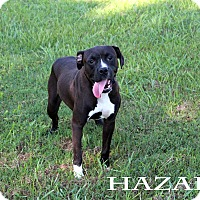 Adopt A Pet :: Hazard - Texarkana, AR