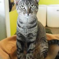 Adopt A Pet :: Lizzie - New Orleans, LA