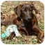 Photo 1 - Labrador Retriever/Plott Hound Mix Dog for adoption in Westfield, Massachusetts - Mystery