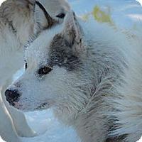 Adopt A Pet :: Storm - Egremont, AB