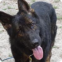 Adopt A Pet :: Yeti - Green Cove Springs, FL