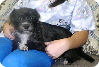 Terrier (Unknown Type, Small) Mix Dog for adoption in Eastpoint, Florida - Tandy