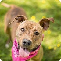 Adopt A Pet :: Brenna - Portland, OR