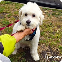 Adopt A Pet :: *URGENT* Gio - Van Nuys, CA