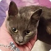 Adopt A Pet :: Blue Girl - Denton, TX